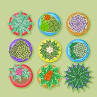 Vector Top View Potted Plants