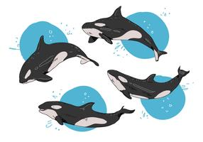Killer Whales Pose Hand Drawn Vector Illustration