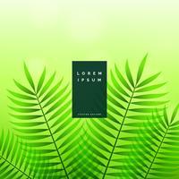 feuilles vertes fond de nature écologique