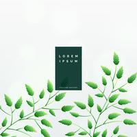 elegante design de fundo de folhas verdes