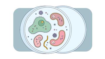 Mikroorganismer Vector