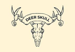 Deer Skull Witih Ribbon