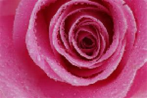 rozenmozaïek