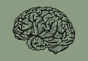 Engraving Brain vector