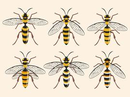 Various Type Of Hornet Vector Illustration