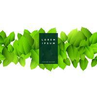 abstrakt grön löv naturbakgrund