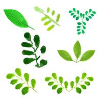 Green trees leaves set vector illustration