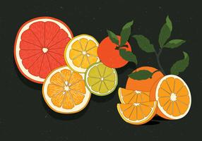 Vintage Citrus Illustrationer Vol 2 Vektor