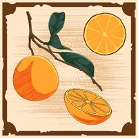 Unika Vintage Citrus Illustrationer Vektorer
