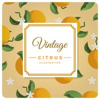 Flat Vintage Citrus Background Vector Illustration
