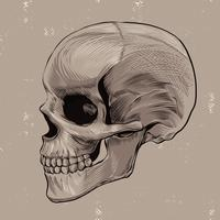 Skull Scratchboard Style Vector Illustration
