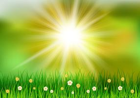 Grasartiger Frühlingshintergrund