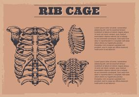 Fondo Digital Ribcage vector