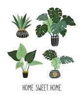 House plants with big leaves isolated on the white background. Tropical garden vector set.