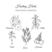 Holistic Medicine. Healing Herbs Illustration. Handdrawn Nasturtium, Nettle, Mint, Licorice and Horsetail. Health and Nature collection. Vector Ayurvedic Herb. Herbal Natural Supplements.