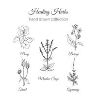 Hand drawn Holistic Medicine Herbs Illustration