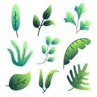 Gradient Green Leaves Vector