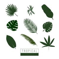 Vector tropical leaves isolate on white.