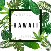 Tropical leaves on white background with isolated sign Hawaii