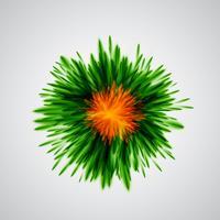 Bunt explodiert / Blumen, vektorabbildung