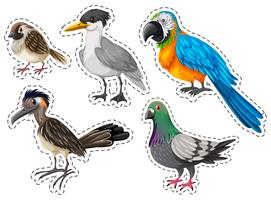 Different types of wild birds