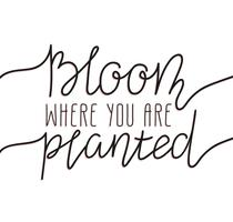 Hand written lettering - bloom where you are planted