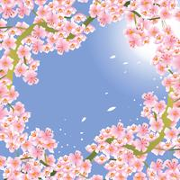 Pink Cherry Blossom Flower Background