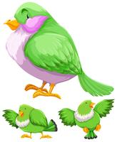 Green bird in three actions