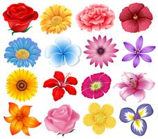 A set of beautiful flowers
