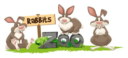 Three rabbits at the zoo sign