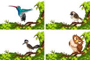 Diferentes aves silvestres en la rama.