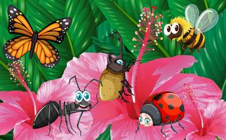 Different types of bugs in garden