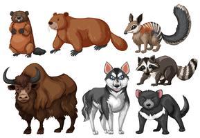 Muchos tipos de animales salvajes.