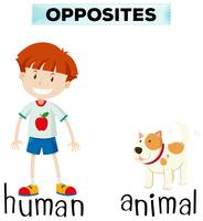 Opposite words for human and animal