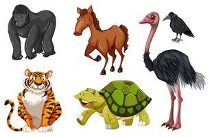 Conjunto de diferentes animales salvajes.