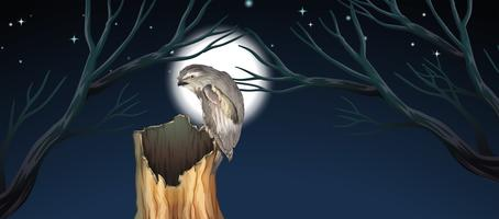An owl hunting at night