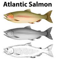 Tres estilos de dibujo del salmón atlántico.