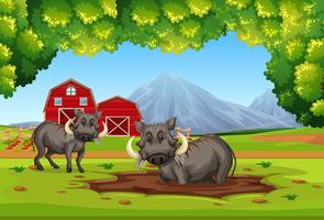 Two warthog in nature vector