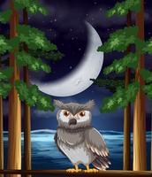 An owl at night background