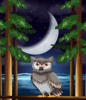 Een uil bij nachtachtergrond