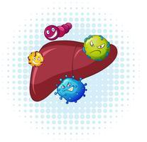 Bacterias en el hígado humano.
