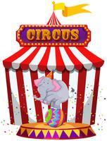 Éléphant jouant devant un chapiteau de cirque