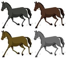 Horse in four colors