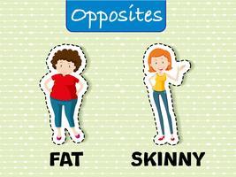 Palabras opuestas para gordo y flaco.