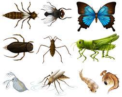 Insectos establecidos en el fondo blanco