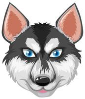 Gezicht van Siberische husky