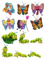 Lagartas e borboletas com asas coloridas