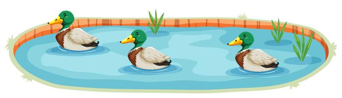 Um, isolado, pato, lagoa