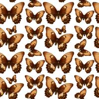 Butterfly on seamless pattern vector