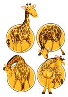 Set of giraffe circle banner